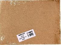 Zarf 24 cm x 32 cm (50'li Paket)